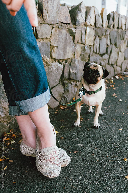 A pug puppy looking up at its owner by J Danielle Wehunt for Stocksy United