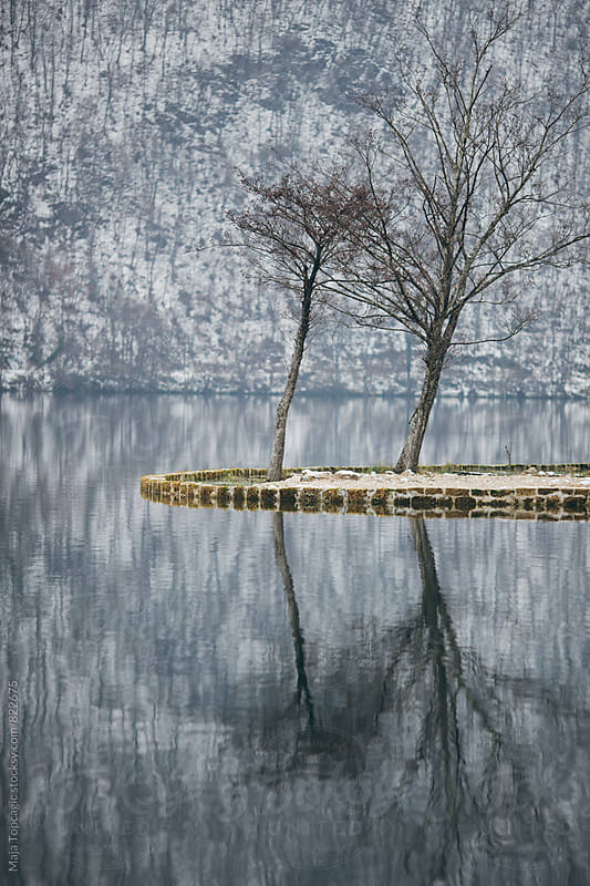 Tree reflections in a lake at winter by Maja Topcagic for Stocksy United