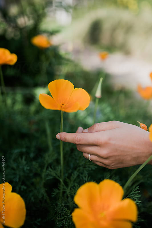 Hand picking flower by Isaiah & Taylor Photography for Stocksy United