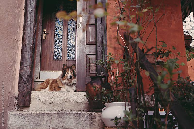 Dog at entrance in Rovinj by Robert Kohlhuber for Stocksy United
