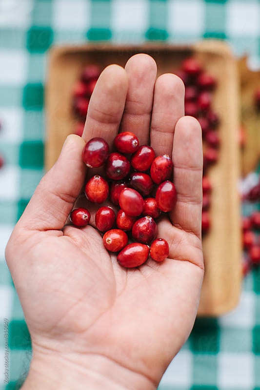 Hand with fresh cranberries by Zocky for Stocksy United