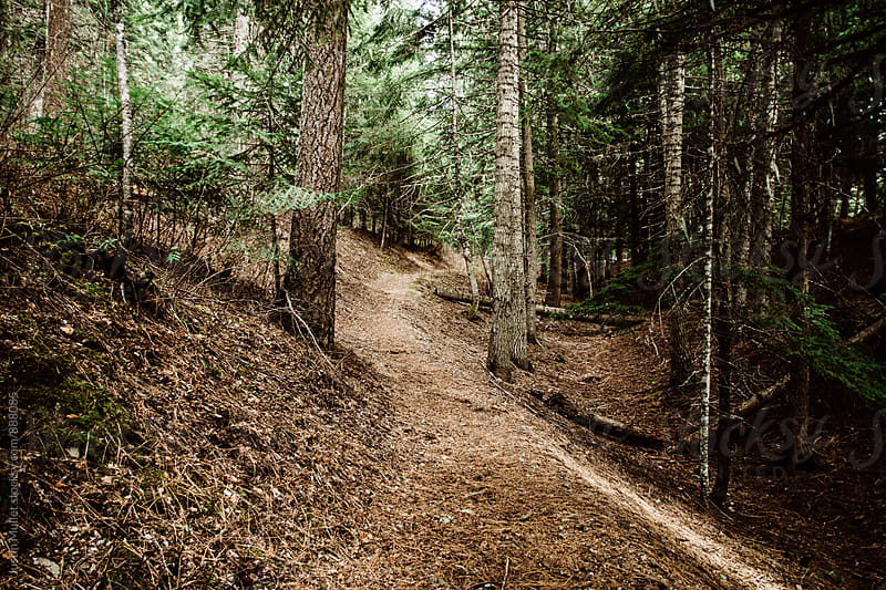 Path through the woods covered in pine needles.  by Justin Mullet for Stocksy United