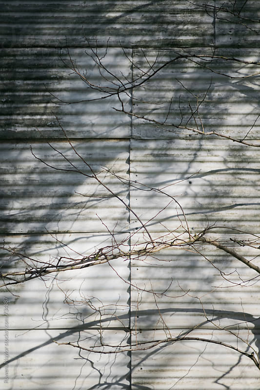 Branches casting a shadow on tin shed in morning light by Rowena Naylor for Stocksy United