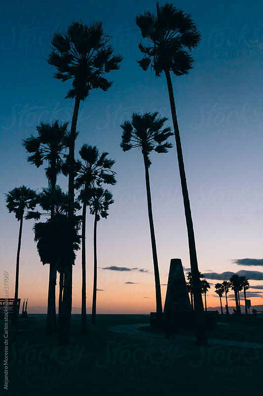 Palm trees on beach seafront - promenade at sunset. Venice beach, Los Angeles, California by Alejandro Moreno de Carlos for Stocksy United