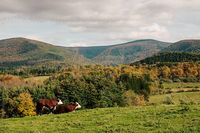 Berkshires Massachusetts by Raymond Forbes LLC for Stocksy United