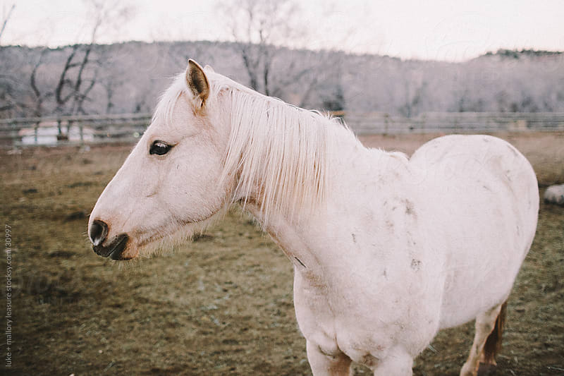 horses by luke + mallory leasure for Stocksy United