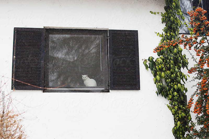 Cat sitting on a window and watching snowfall by Jovana Rikalo for Stocksy United