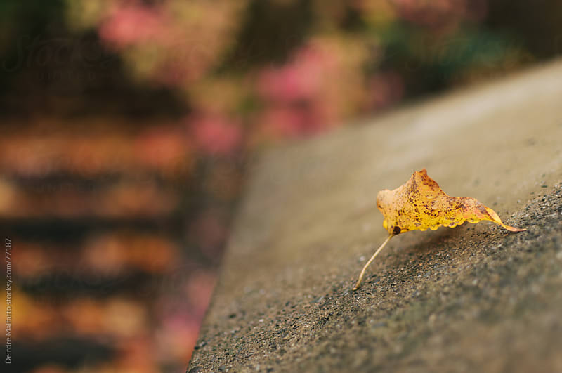 yellow leaf on a cement wall in autumn by Deirdre Malfatto for Stocksy United