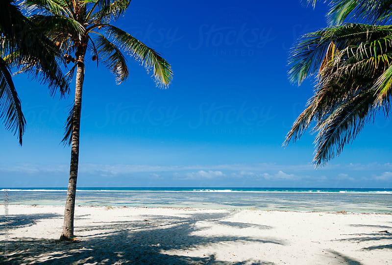 Idyllic Tropical Beach by Agencia for Stocksy United