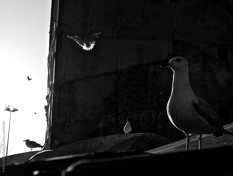 Istanbul Fish Market Seagul by Freek Zonderland for Stocksy United