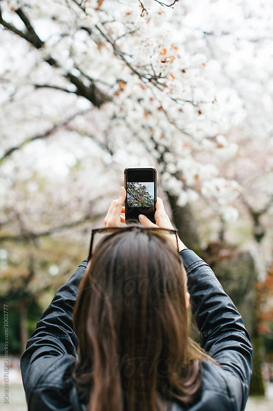 Back view of a tourist taking a photo with phone of the cherry blossom in Japan. by BONNINSTUDIO for Stocksy United