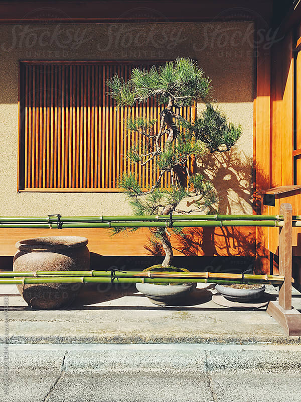 Japanese Aesthetics - Fir Tree in Front of Traditional Kyoto House by VISUALSPECTRUM for Stocksy United