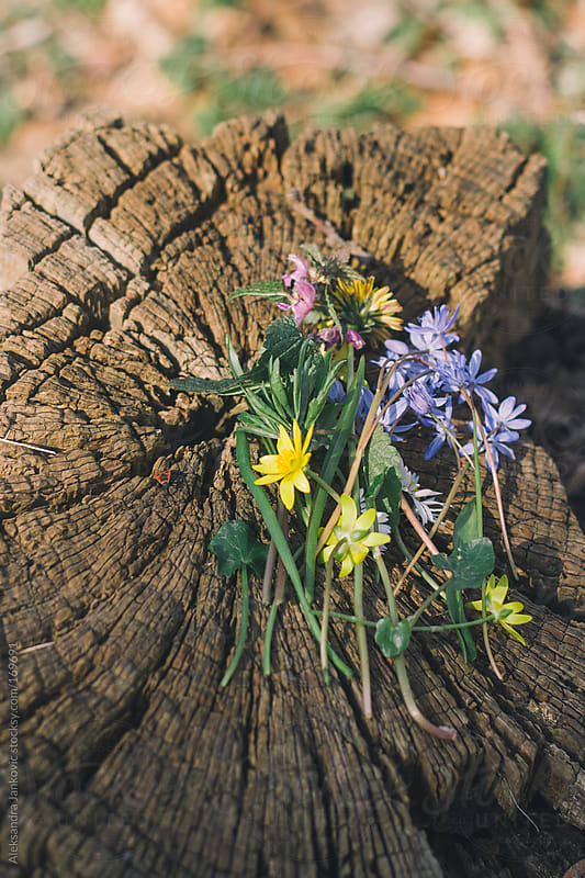 Wildflowers on the stump by Aleksandra Jankovic for Stocksy United