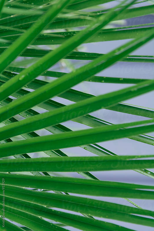 Overlapping palm fronds by Kristin Duvall for Stocksy United