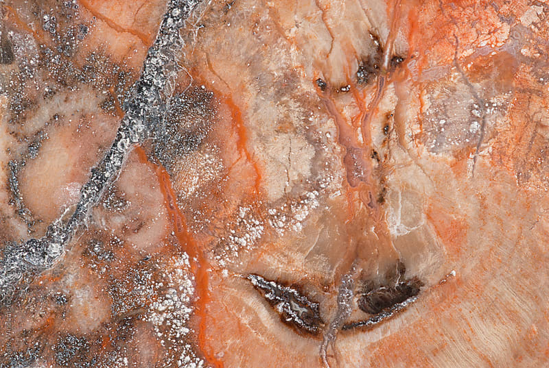 Petrified conifer wood macro by Mark Windom for Stocksy United