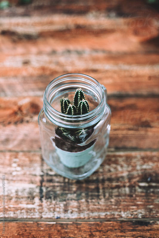 Little cactus inside a glass by Thais Ramos Varela for Stocksy United
