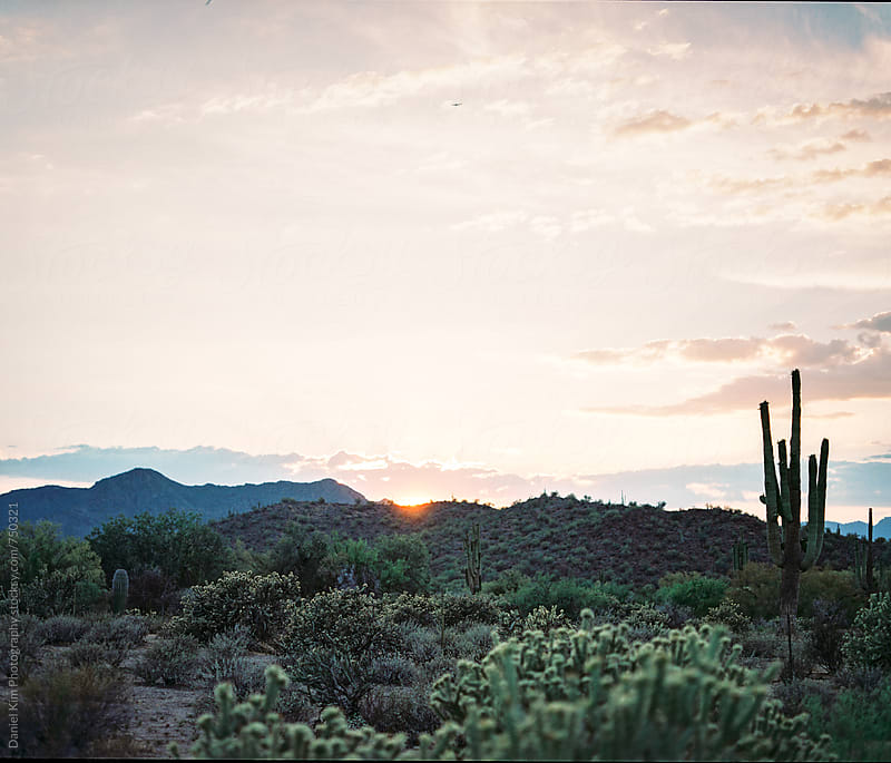 Desert landscape at sunset by Daniel Kim Photography for Stocksy United