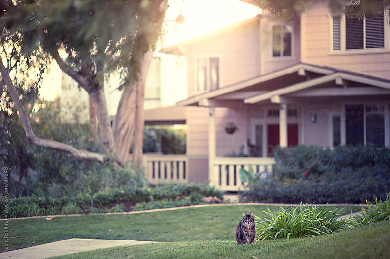 Cat in a grassy yard in front of a grand house by Rachel Bellinsky for Stocksy United
