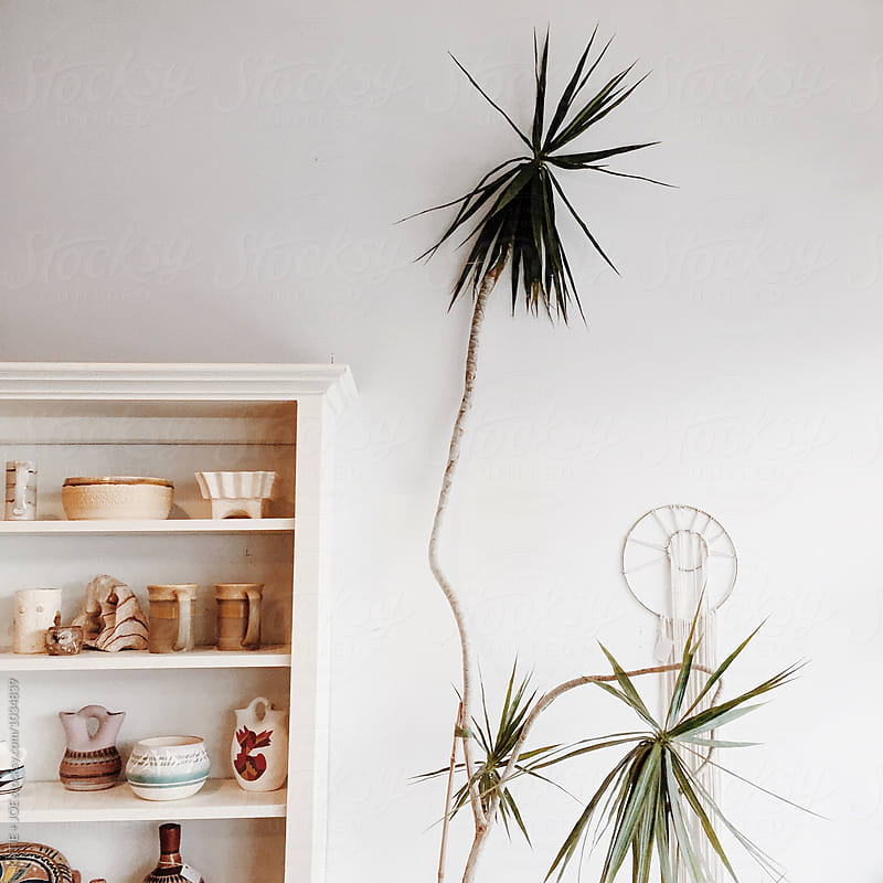 shelf filled with pottery next to a tall spiky plant by KATIE + JOE for Stocksy United