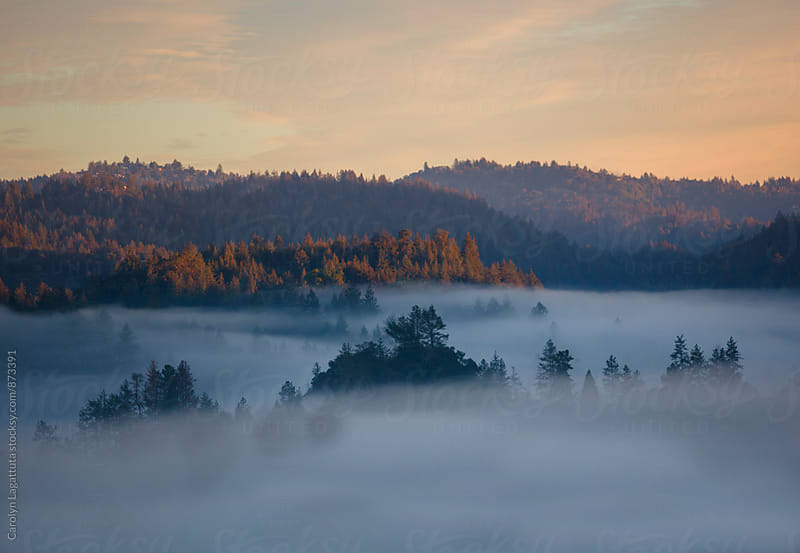 Fog nestled in a mountainous tree filled valley at dawn by Carolyn Lagattuta for Stocksy United