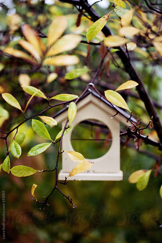 House shaped bird feeder amongst yellow leaves on shrub by Laura Stolfi for Stocksy United