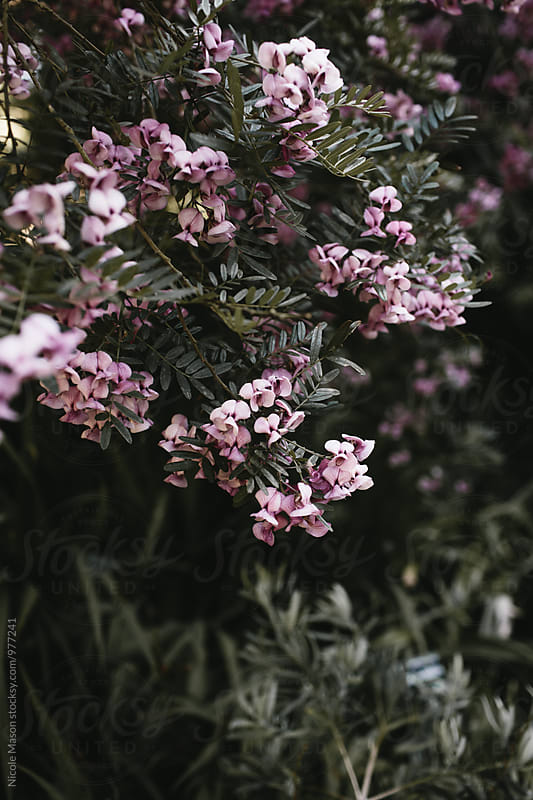 pretty pink flowers and greenery by Nicole Mason for Stocksy United