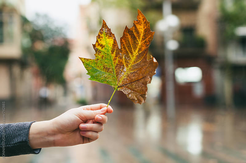 Hand of a woman showing a leaf in autumn. by BONNINSTUDIO for Stocksy United