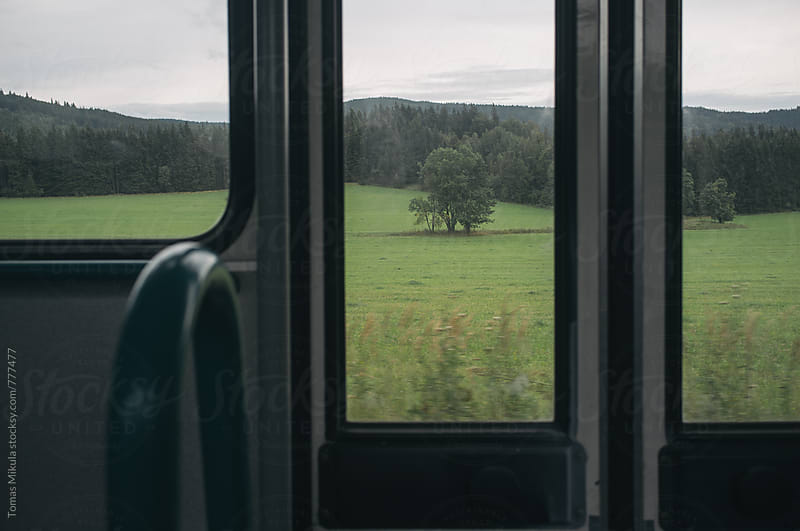 Tree in the window by Tomas Mikula for Stocksy United