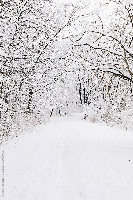 Snowed path in forest by Borislav Zhuykov for Stocksy United