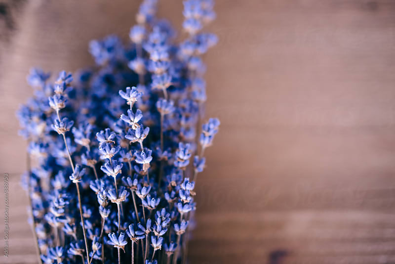 Lavender bouquet by Adrian Cotiga for Stocksy United