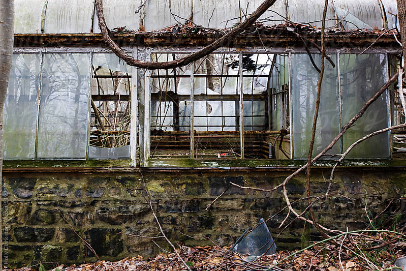 Nature reclaims an abandoned greenhouse. by Holly Clark for Stocksy United