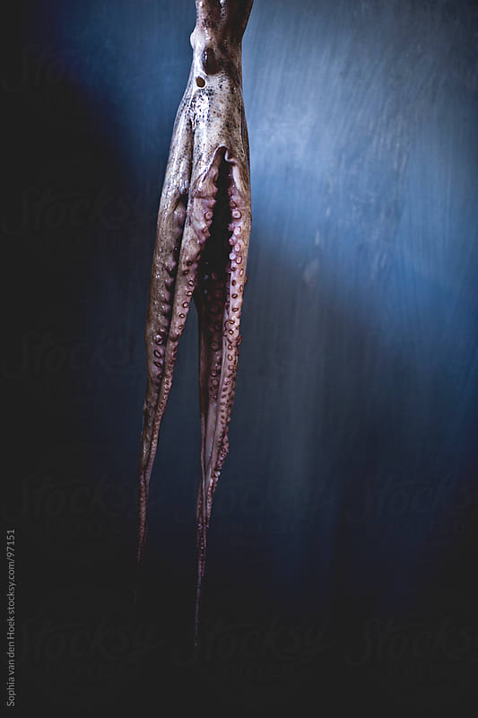Octopus by Sophia van den Hoek for Stocksy United