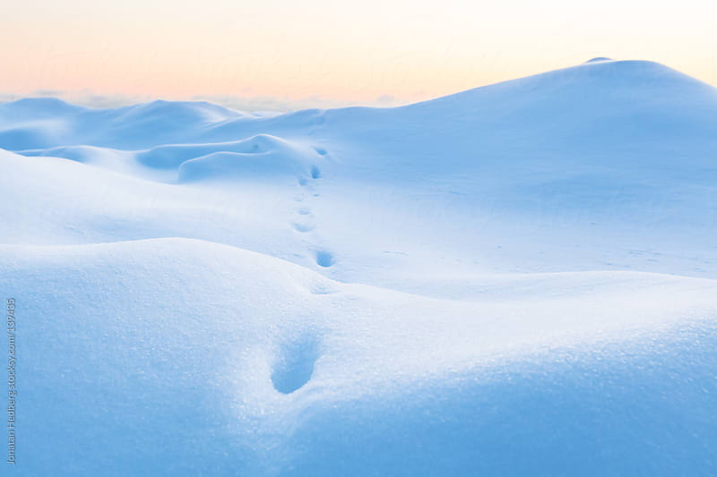 Tracks from a fox in deep untouched snow on the coast of Helsinki by Jonatan Hedberg for Stocksy United