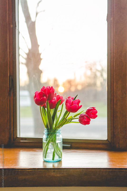 A bunch of red tulips in a vase on the windowsill by Lindsay Crandall for Stocksy United