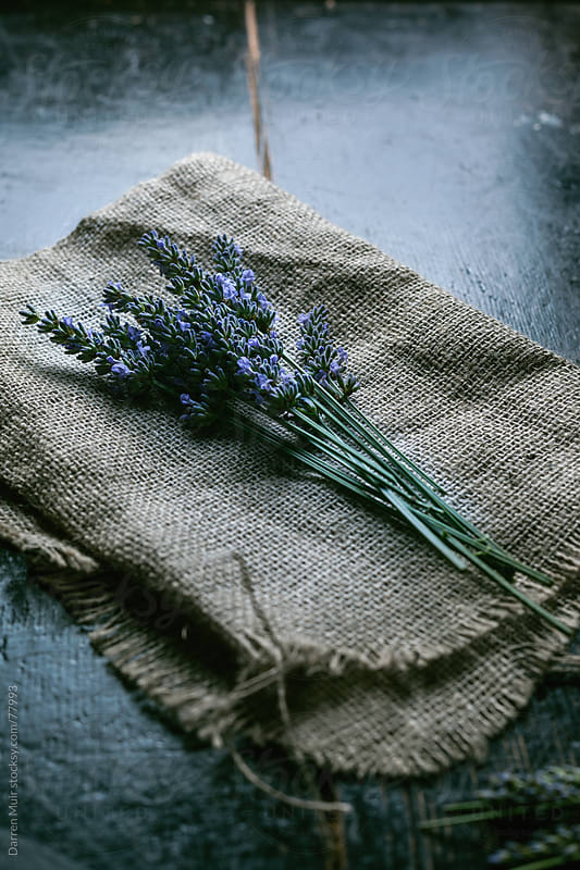 Rustic Lavender.  by Darren Muir for Stocksy United
