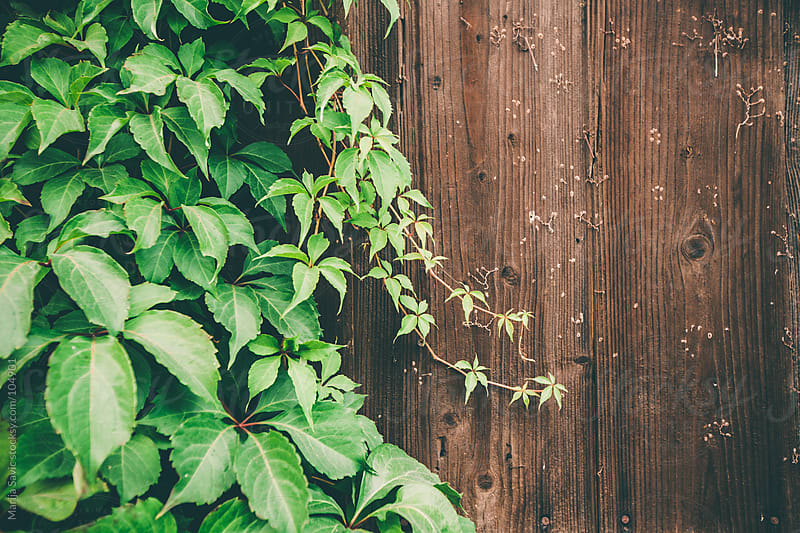 Greenery on a wooden background. by Marija Savic for Stocksy United