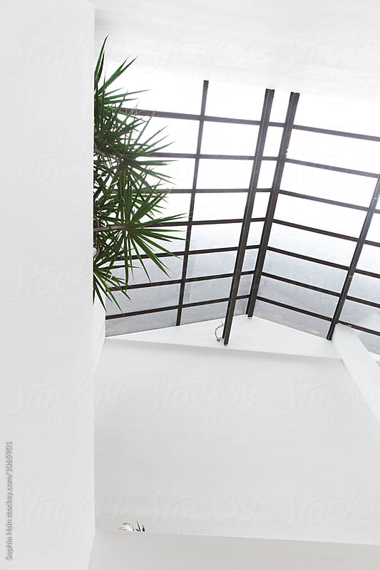 White space with window and green plant by Sophia Hsin for Stocksy United