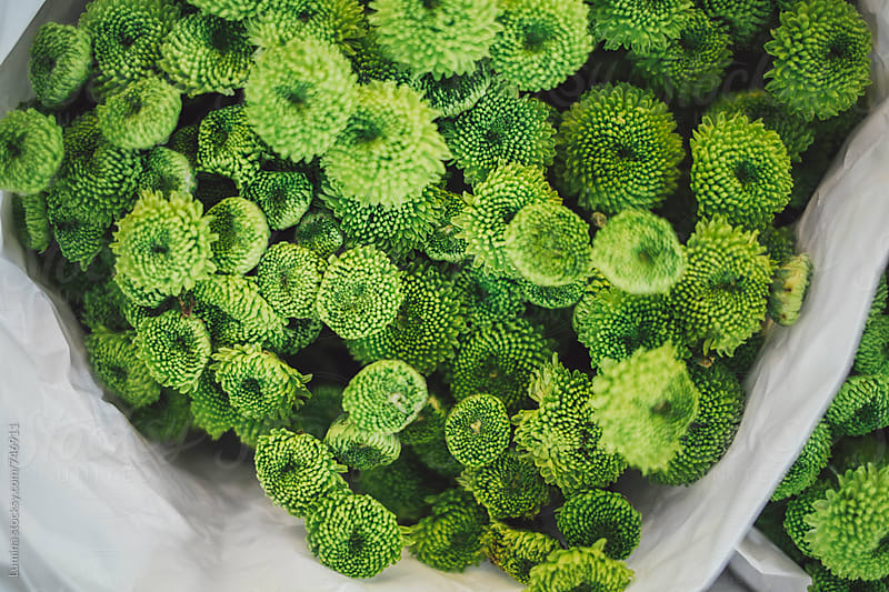 Green Flower Bouquet by Lumina for Stocksy United