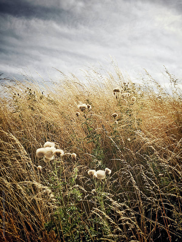 Long grasses in autumn sunlight by James Ross for Stocksy United