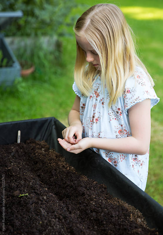 A little girl sowing seeds in a raised vegetable bed by Helen Rushbrook for Stocksy United