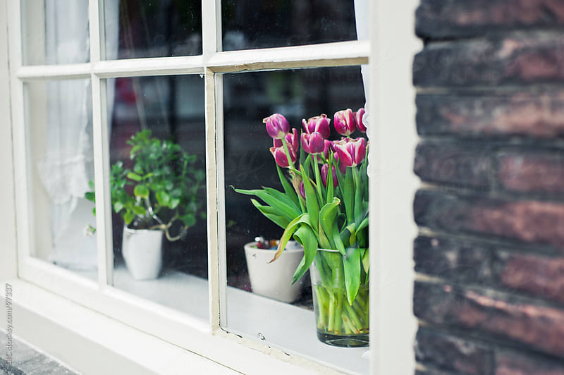 Tulips Flowers Pot on the Windowsill of a Dutch House by GIC for Stocksy United