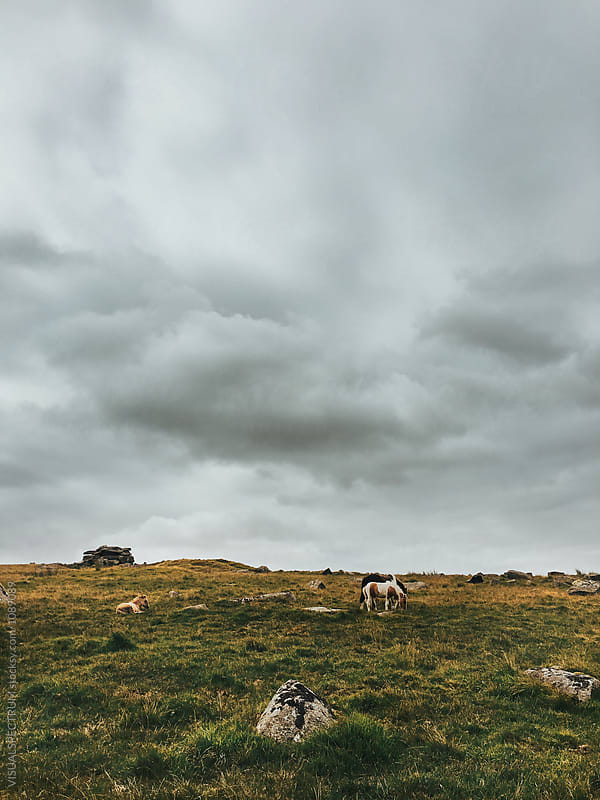 Grazing Horses (Dartmoor National Park, Devon, England) by Julien L. Balmer for Stocksy United