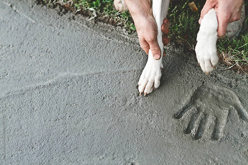 man putting dog paw into wet cement to make a paw print. by Jess Lewis for Stocksy United