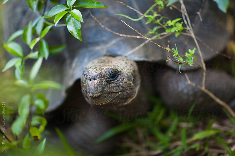 Galápagos Islands, Isabela Island, Ecuador by Mark Pollard for Stocksy United