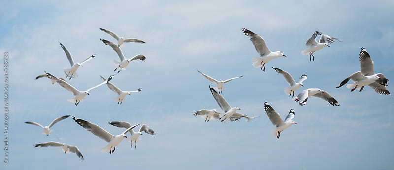 Looking up at a Flock of Seagulls by Gary Radler Photography for Stocksy United