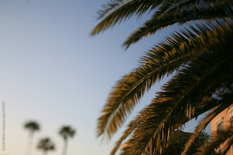 Palm Tree Fronds by ALICIA BOCK for Stocksy United
