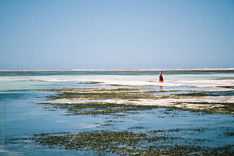 Unidentifiable seaweed farmer on a Zanzibar beach at low tide by Helen Rushbrook for Stocksy United