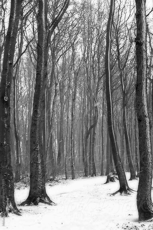 Path through wintery forest in black and white by Melanie Kintz for Stocksy United