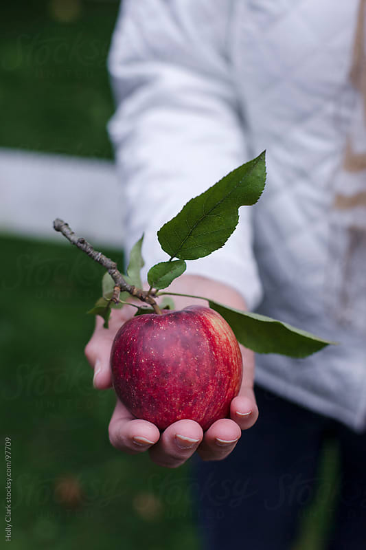 A ripe apple held in an outstretched hand. by Holly Clark for Stocksy United