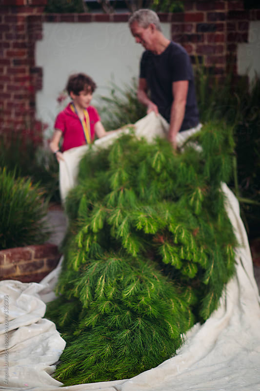 Father and son with a freshly cut christmas tree by Angela Lumsden for Stocksy United